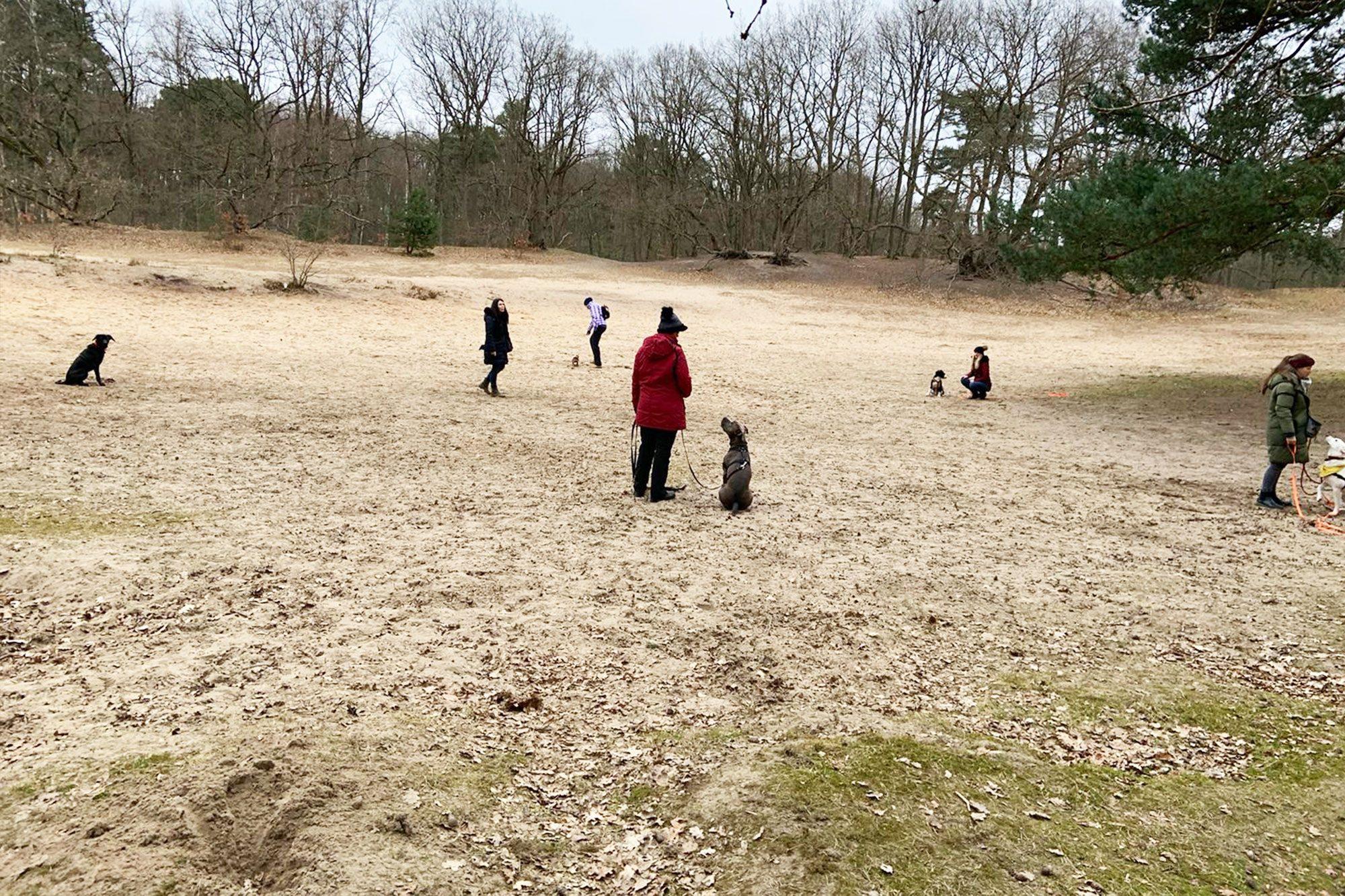 Gruppenstunde in der Rissener Heide am Leuchtturmweg